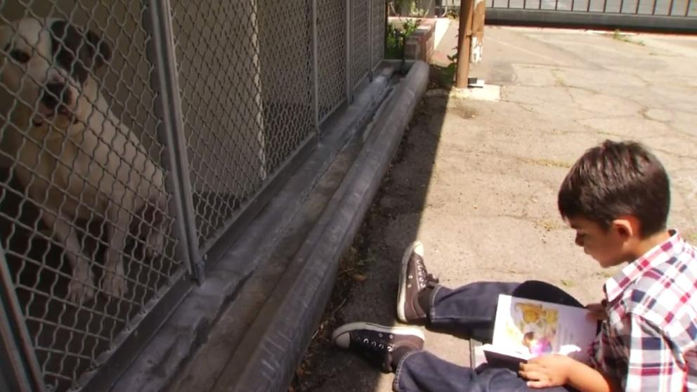 jacob niño autista lee cuentos perros